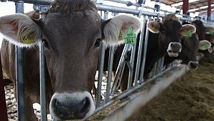 Genç Çiftçiler 931 Milyon Lira Destek Aldı