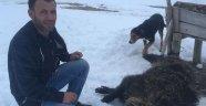 Ilgın'da domuzun saldırdığı kişi yaralandı