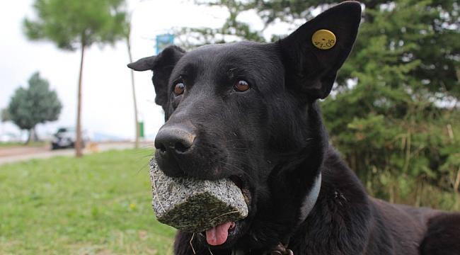 Yavrularını kaybeden köpeğin dramı yürek burktu