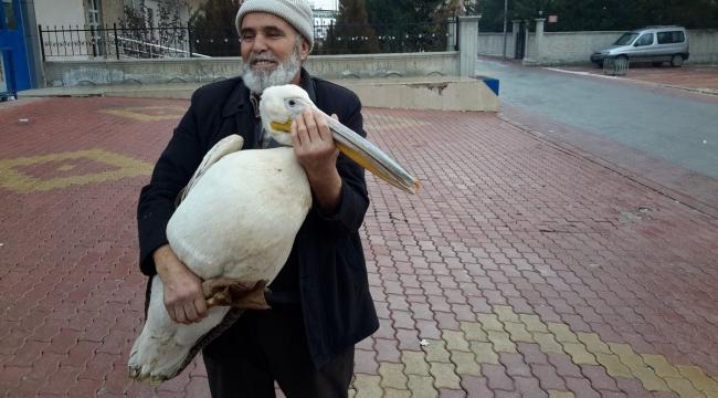 Yaralı pelikanı evinde balıkla besledi