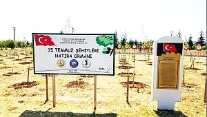 HATIRA ORMANINDA HER ŞEHİDE BİR FİDAN