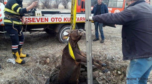 Kuyudan kurtuldu, kasaptan kurtulamadı