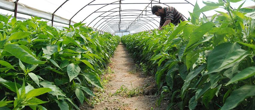 örnek çiftçiler seracılıkta önder oldu